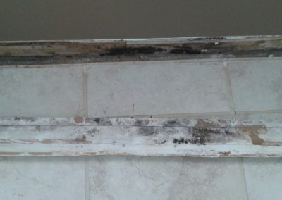 11 microbial growth on baseboard and wall