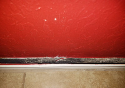 13 mold behind baseboard on wall in backside of cabinets