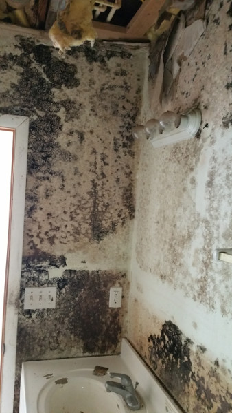 14 1st floor bathroom - aggressive mold growth