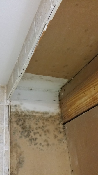 17 Mold on wall behind and above cabinet